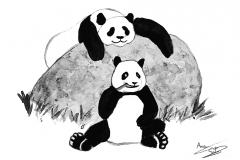 osos panda postal
